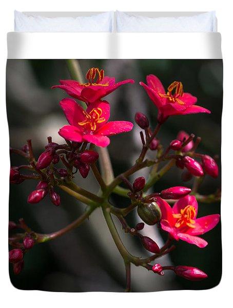 Red Jatropha Blossoms Duvet Cover