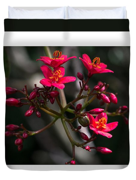 Red Jatropha Blossoms Duvet Cover