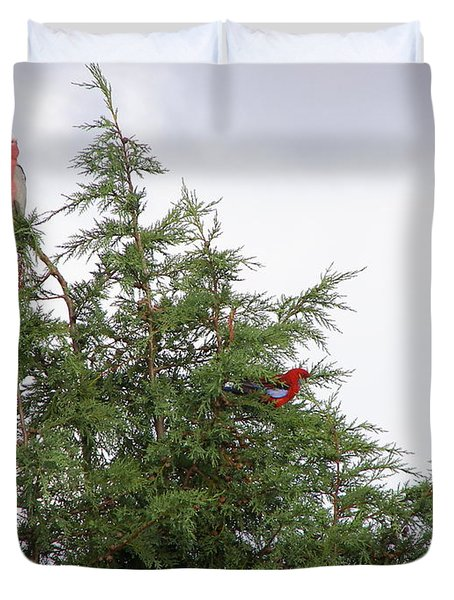 Red-breasted Cockatoos And Crimson Rosellas Duvet Cover by Bev Conover