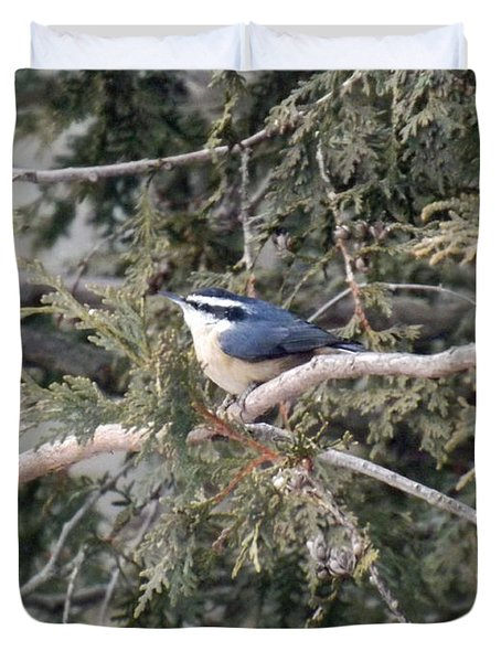 Duvet Cover featuring the photograph Red Breasted Nuthatch by Brenda Brown