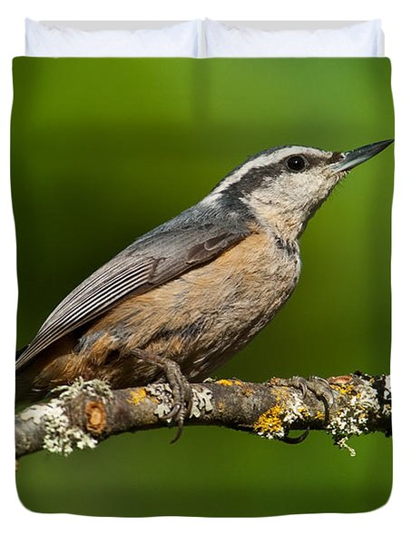 Red Breasted Nuthatch In A Tree Duvet Cover