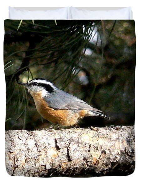 Red-breasted Nuthatch In Pine Tree Duvet Cover