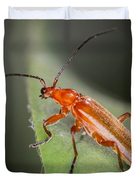 Red Cardinal Beetle Duvet Cover