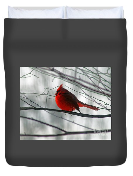 Red Cardinal On Winter Branch  Duvet Cover