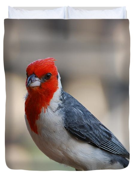 Red Crested Cardinal Duvet Cover by DejaVu Designs