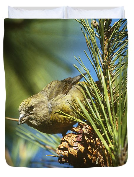 Red Crossbill Eating Cone Seeds Duvet Cover