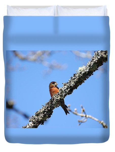 Red Crossbill Finch Duvet Cover