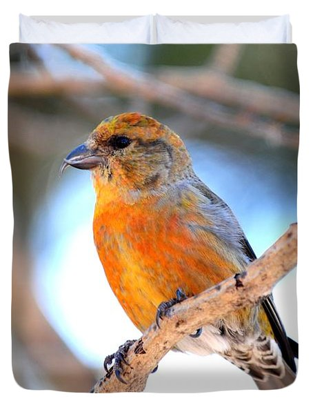Red Crossbill On Aspen Duvet Cover