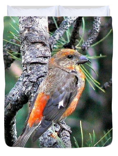 Red Crossbill On Pine Tree Duvet Cover