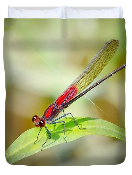 Red Damselfly Duvet Cover by Peggy Franz