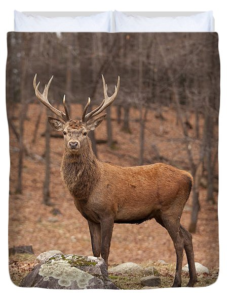 Red Deer Duvet Cover