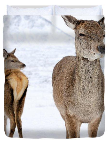Red Deer In The Snow Duvet Cover