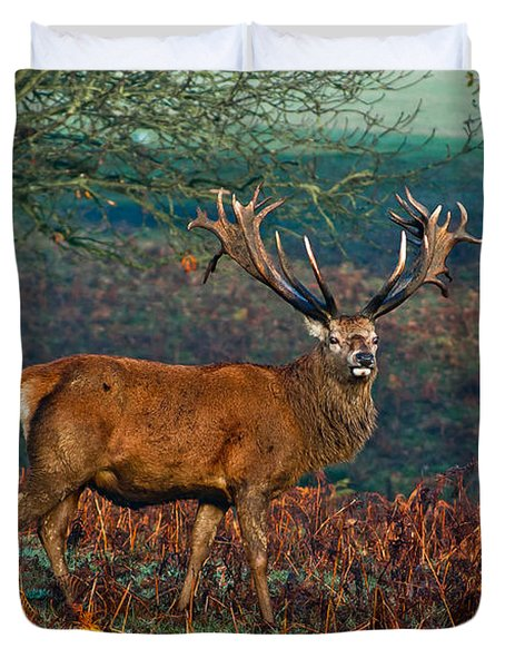 Red Deer Stag In Woodland Duvet Cover
