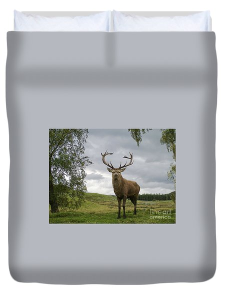 Duvet Cover featuring the photograph Red Deer Stag by Phil Banks