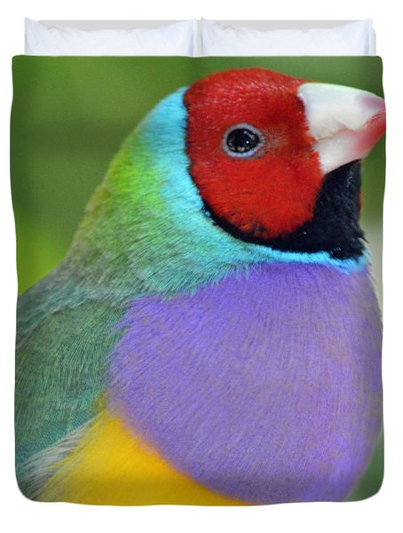 Red Faced Gouldian Finch Duvet Cover by Richard Bryce and Family