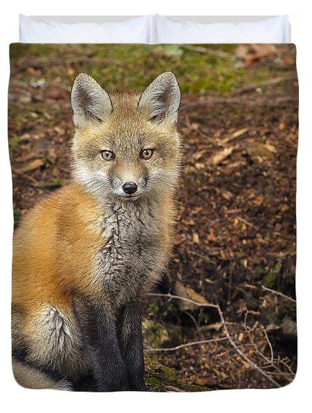 Red Fox Kit-posing Duvet Cover