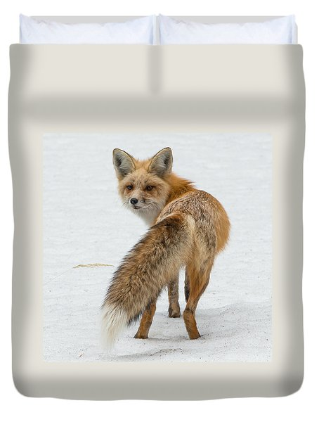 Red Fox Of Silver Gate Duvet Cover by Yeates Photography