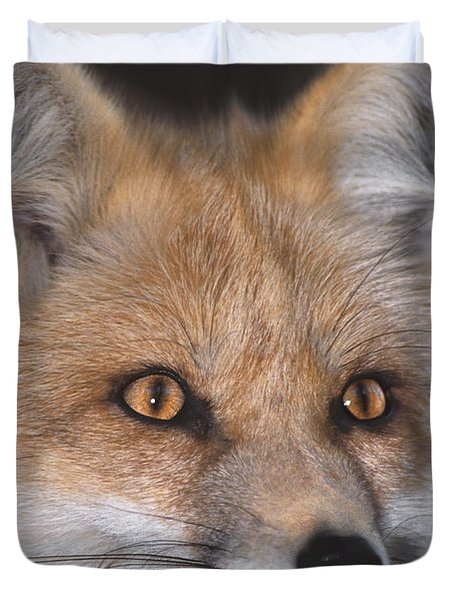 Duvet Cover featuring the photograph Red Fox Portrait Wildlife Rescue by Dave Welling