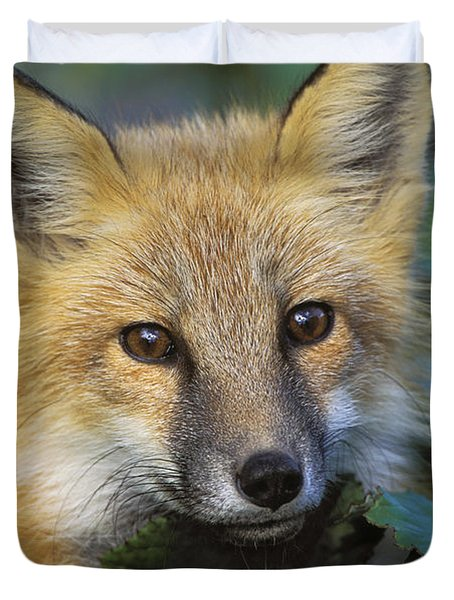 Red Fox Vulpes Vulpes, Gros Morne Duvet Cover