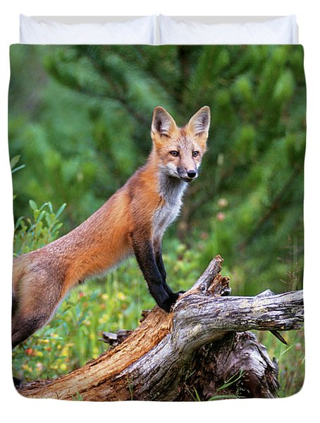 Red Fox Vulpes Vulpes Standing Duvet Cover