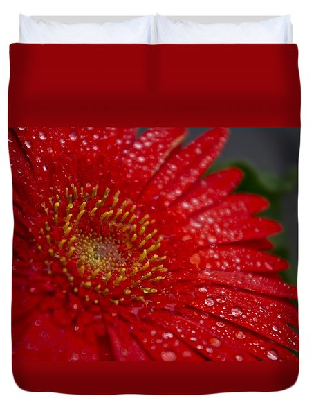 Red Gerber In The Rain Duvet Cover by Shelly Gunderson