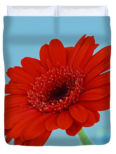 Red Gerbera Daisy Duvet Cover by Scott Carruthers