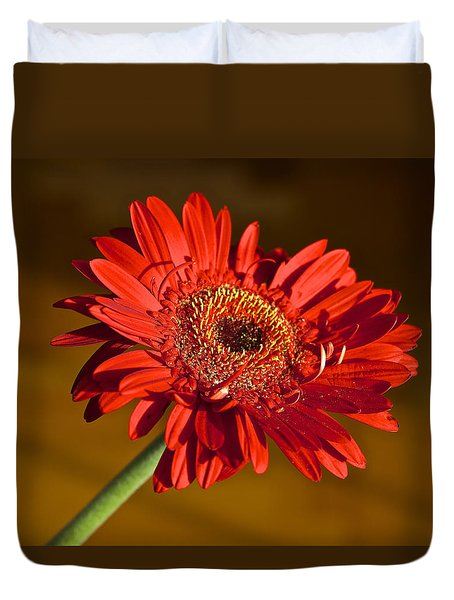 Red Gerbera Duvet Cover by Venetia Featherstone-Witty