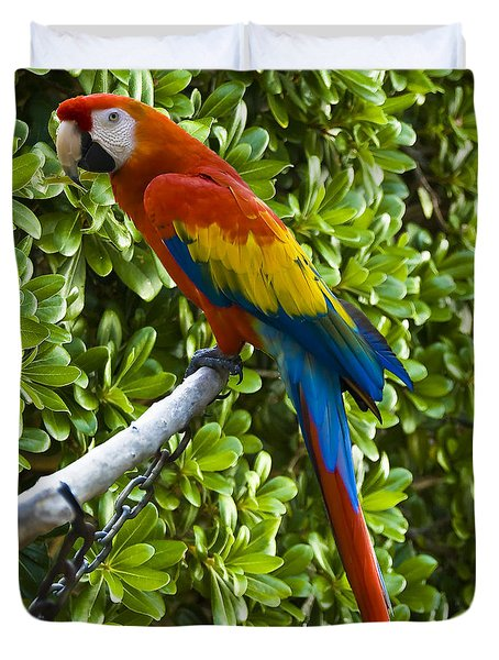 Red-green Macaw Duvet Cover