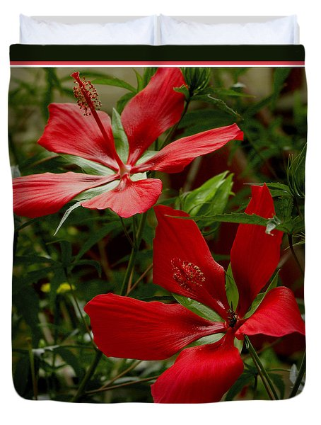 Red Hibiscus Blooms Duvet Cover