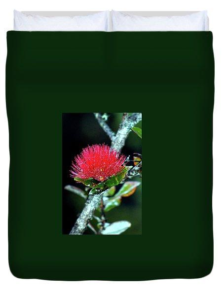 Red Lehua  Kawaiko'olihilihiokalikolehua Duvet Cover