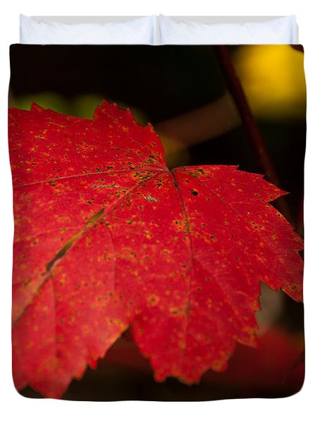 Red Maple Leaf In Fall Duvet Cover by Brenda Jacobs