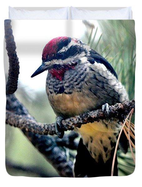 Red-naped Sapsucker On Pine Tree Duvet Cover