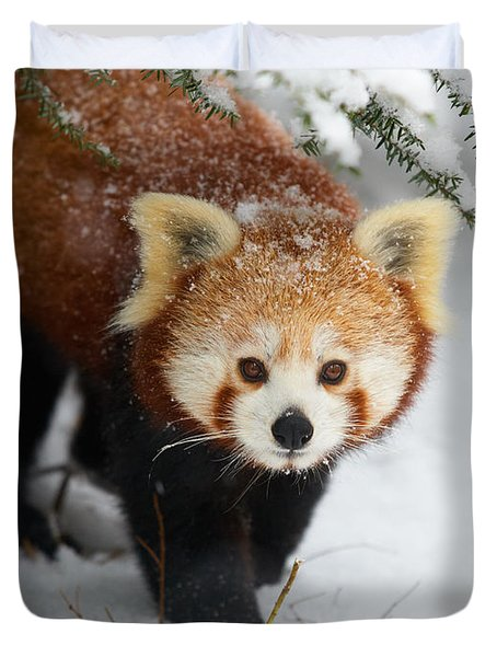 Red Panda In The Snow Duvet Cover