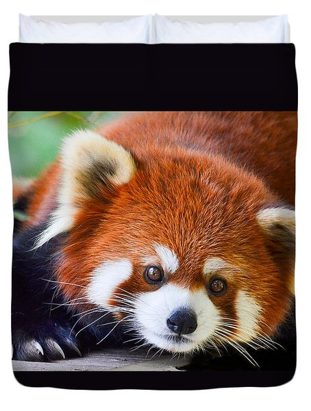 Red Panda Duvet Cover by Michael Hubley