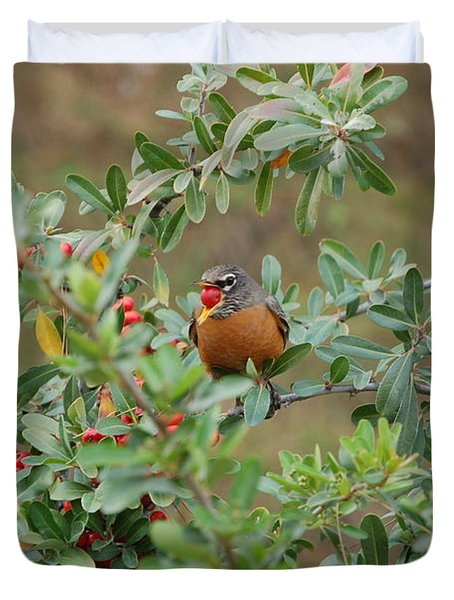 Red Robin Eating Berries Duvet Cover