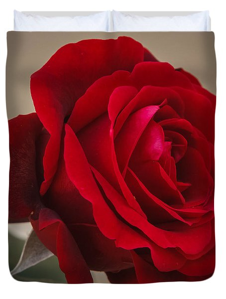 Red Rose Duvet Cover by Jane Luxton