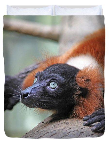 Red-ruffed Lemur Duvet Cover by Karol Livote