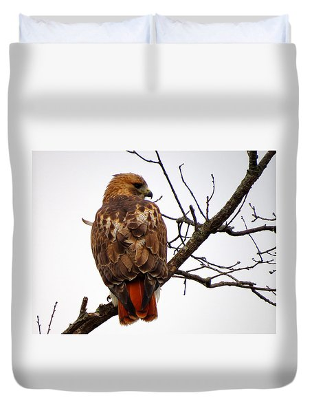 Red Tail Hawk In Winter Duvet Cover