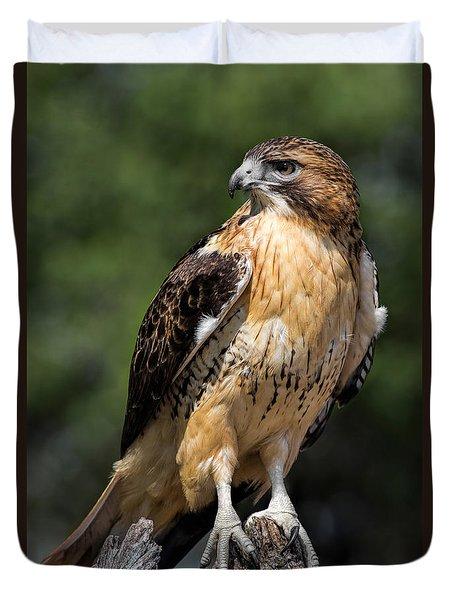 Red Tail Hawk Portrait Duvet Cover