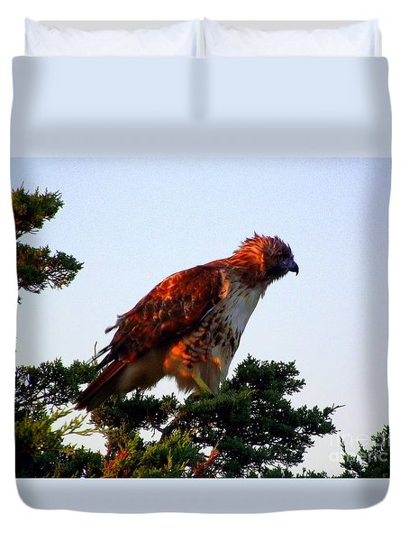 Red-tailed Hawk Fluff Up Duvet Cover by CapeScapes Fine Art Photography