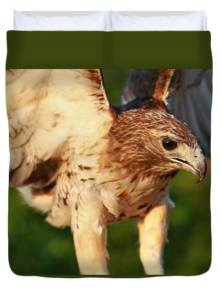 Red Tailed Hawk Hunting Duvet Cover by Dan Sproul