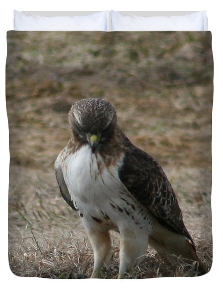Red Tailed Hawk Duvet Cover by Neal Eslinger