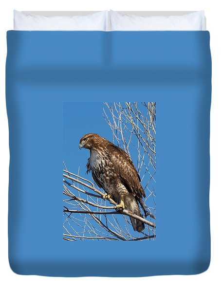 Red-tailed Hawk Watching The Ducks Duvet Cover