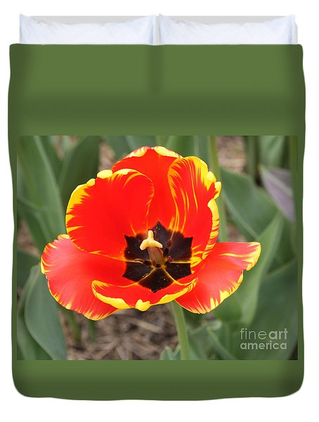 Red Tulip At Brooklyn Botanical Gardens Duvet Cover by John Telfer