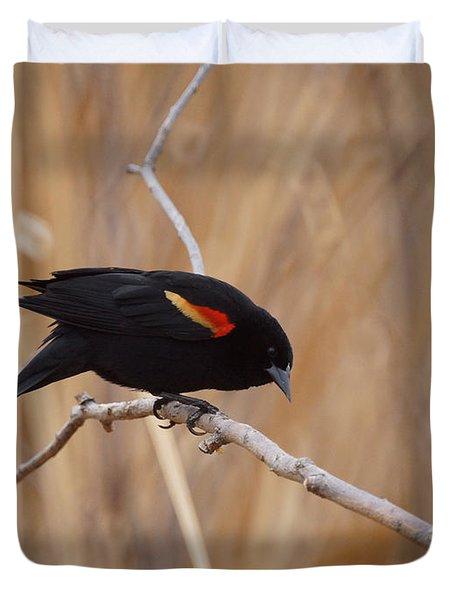Red Winged Blackbird 1 Duvet Cover