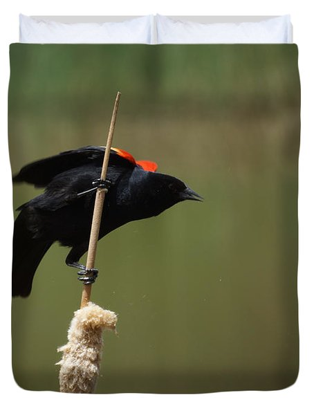 Red Winged Blackbird 3 Duvet Cover by Ernie Echols