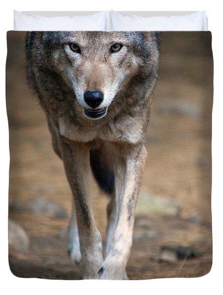 Red Wolf Strut Duvet Cover by Karol Livote