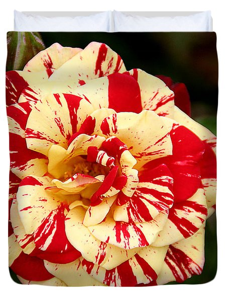Red Yellow Rose Duvet Cover by Christine Till