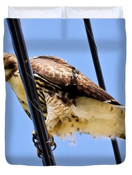Redtailed Hawk Duvet Cover