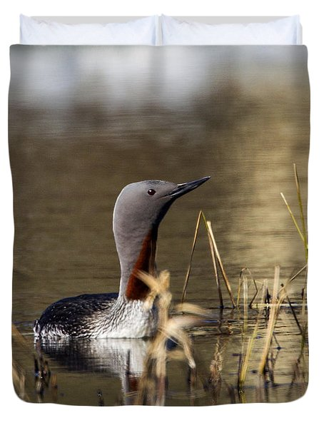 Redthroated Loon Duvet Cover